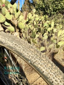 The 650B X 50mm Mso with a cactus background